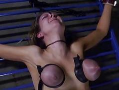 Contents beauty with hard toy
